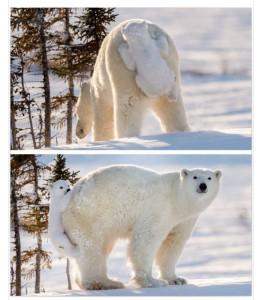 polar pad